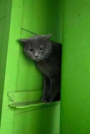 Потерялся кот / Ищу кота - 2,000 грн