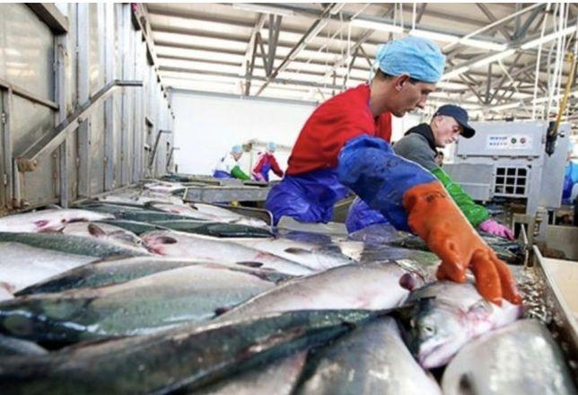 Производство, цех по переработке, хранению рыбной продукции
