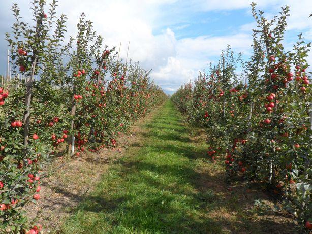 Действующий бизнес - садоводческое хозяйство в Беларуси