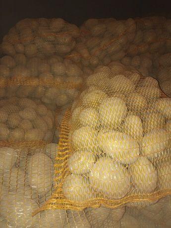 Ziemniaki jadalne Denar Vineta