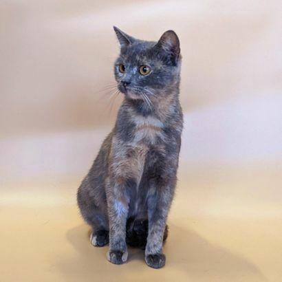 Котенок Аиша ищет семью котенок котята кошеня кот кошка котеня