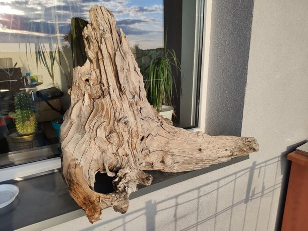 Duży korzeń do akwarium
