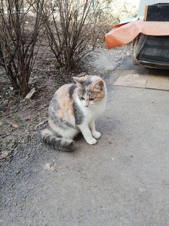 Отдам котенка трехцветку , 6 месяцев