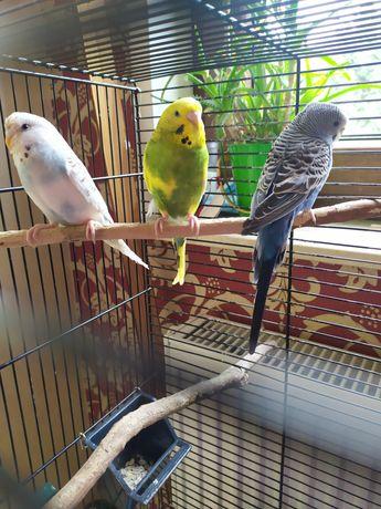 Papugi + klatka i wszystkie akcesoria