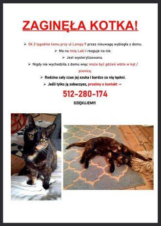 Ponad  dwa miesiące temu zaginęła kotka,reaguję na imię Laki