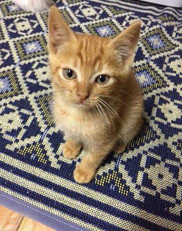 Gato (M) para adoção