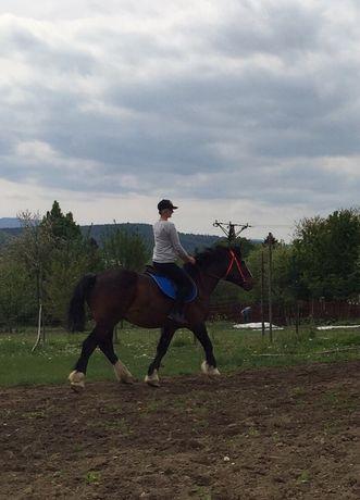 Wydzierżawie Konia do Jazdy