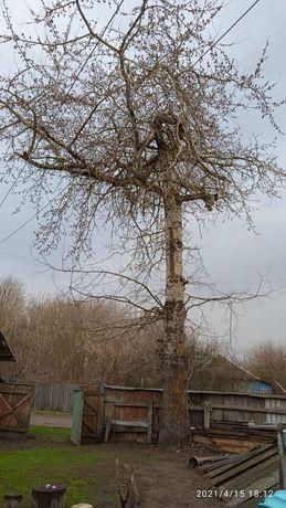 Дерево на доску большое
