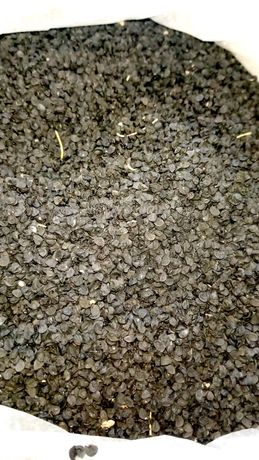 Продам семена лука (чернушка)