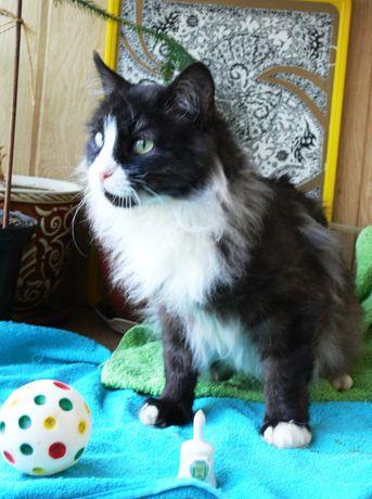 Ванесса-- молоденькая кошечка ищет семью