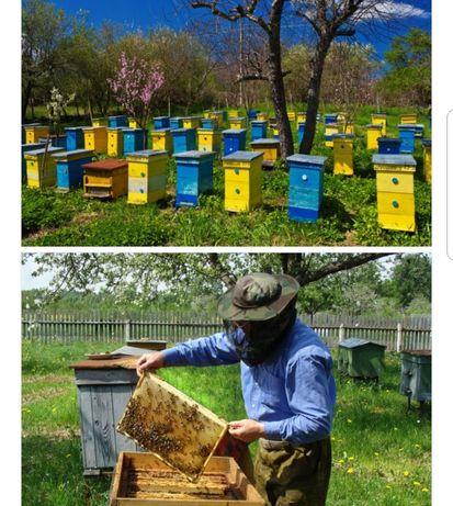 Все о пчеловодстве