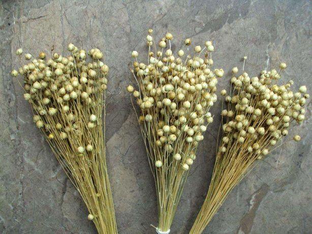 len susz trawy zboże proso żyto owies pszenica jęczmień słoma