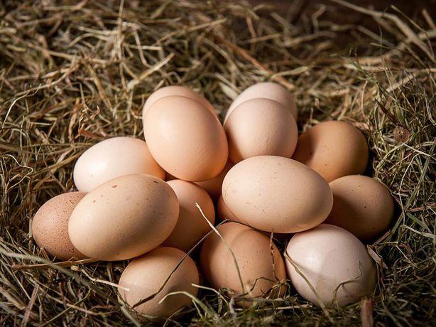 Jaja jajka wiejskie z wolnego wybiegu eko dowóz