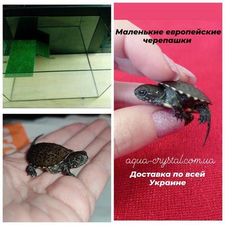 Комплект:черепашка маленькая 2шт.+террариум+корм.Доставка по Украине