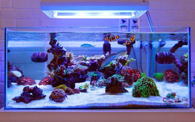 Seachem MATRIX 3Litry+2Litry GRATIS Ceramika Akwarium Morskie Paletki