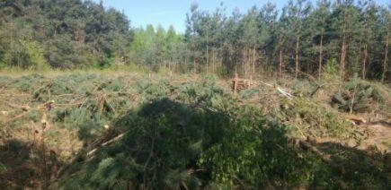 ODDAM gałęzie sosnowe, brzozowe ,BIOMASA, duża ilość, Radom, Zwoleń