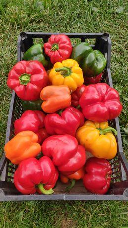 Sprzedam paprykę, pomidory, marchew, ziemniaki