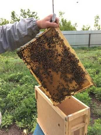 Бджолопакети, пчелопакеты 16.06