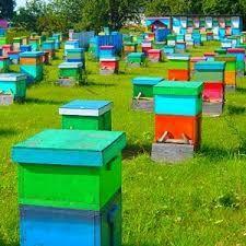 Продаётся пасека,пчёлы.