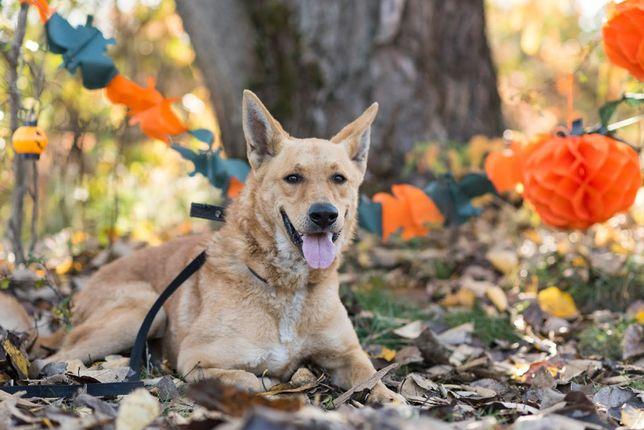 SAMI-duży młody pies poleca siędo adopcji