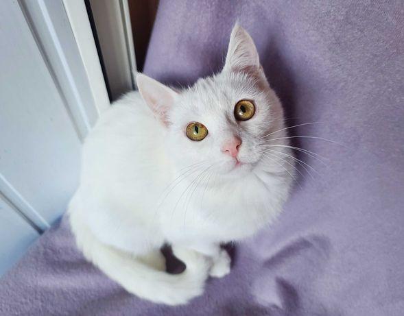 Маленькая белоснежная кошечка Снежана 3 месяца котенок кошка