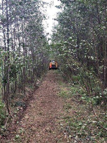 Porządkowanie działek krzaków samosiejek karczowanie drzew mulczer