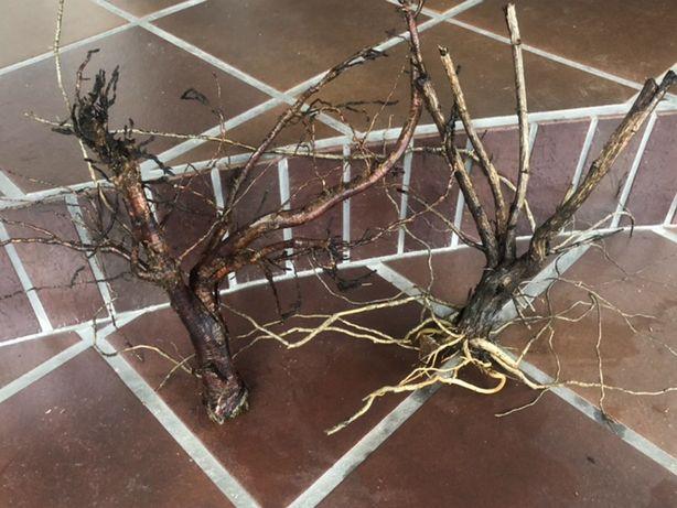 Piękne korzenie i konary na drzewka akwariowe lub zamiana , wysyłka!