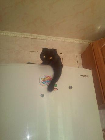 чорный веслоухий котик-вязка.ждем