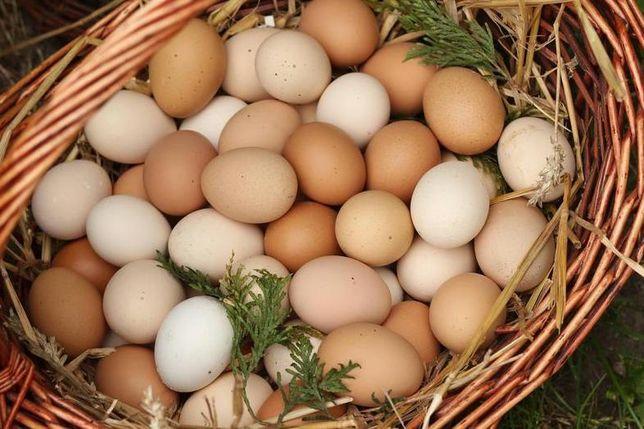 Jaja wiejskie :)
