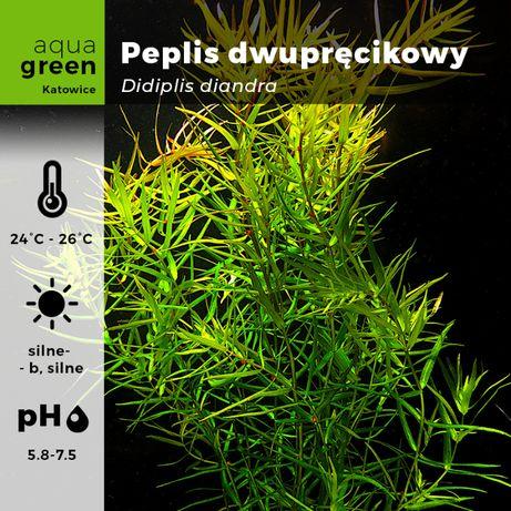 Peplis dwupręcikowy Didiplis diandra 10szt.