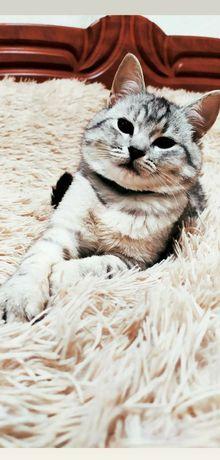 Кошка или кот на новоселье