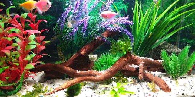 Коряга в аквариум
