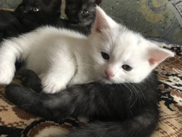 Біле кошеня хлопчик