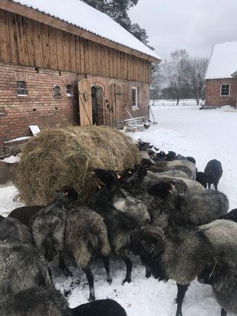 Oddam za darmo Wrzosówka wrzosówki owce barnek kosiarka