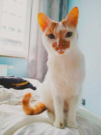 Pan Kot - rudy kot do adopcji, miłość na 4 łapkach! Dość samotności :(