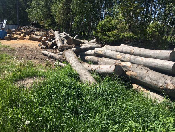 Drewno kominkowe drzewo opałowe