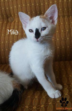 Koteczka Mila