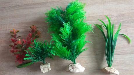 Ozdobne rośliny do akwarium