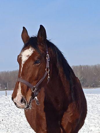 Продам Лошадь конь кінь