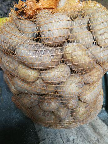Ziemniaki odmiana tajfun oraz red Leydi