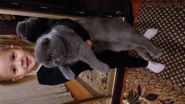 Обаятельный котик для вязки