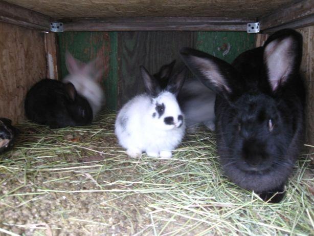 Кролики крупной породы!