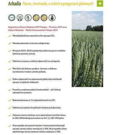 Pszenica ozima Arkadia - na późne siewy po kukurydzy