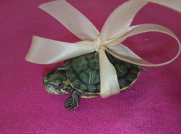 Великолепная маленькая черепаха с террариумом и кормом. Доставка