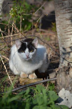 Молодая стерилизованная кошка ищет дом