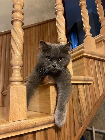 Пропав сірий кіт