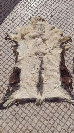 Peles de cabra tapete e outros