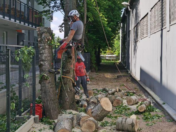 Wycinka i Pielęgnacja Drzew frezowanie, rębak - usługi profesjonalne