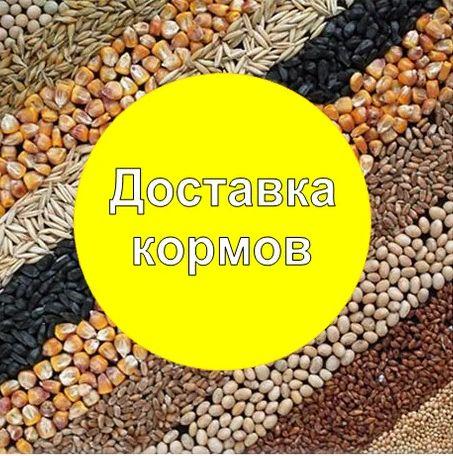 доставка кормов: кукуруза, отруби, пшеница, макуха