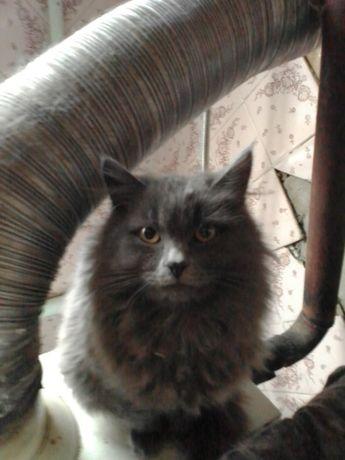 Очень пушистый котик. 7 месяцев
